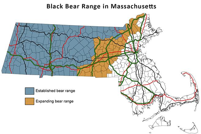 Increased Bear Sightings in Southern Worcester County